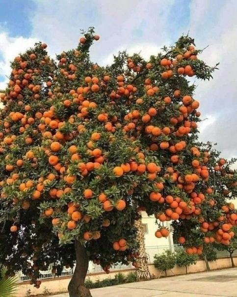 Замечательный урожай! Абхазия