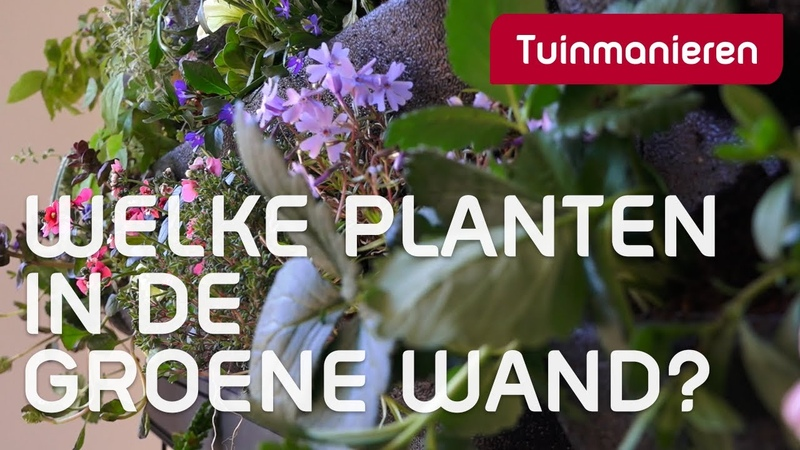 Een groene wand of verticale tuin welke planten zet je erin Tuinaanleg Tuinmanieren