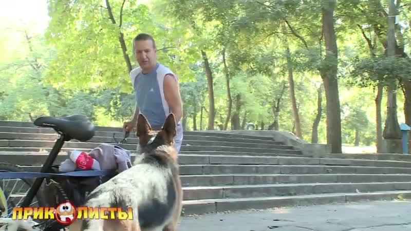 Собачка Отдай велосипед
