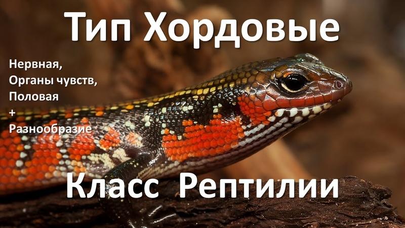 14 2 Рептилии часть II 7 класс биология подготовка к ЕГЭ и ОГЭ 2018