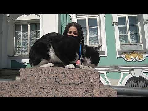 Коты Эрмитажа Гиды переводчики поздравляют Санкт Петербурга с Днём города