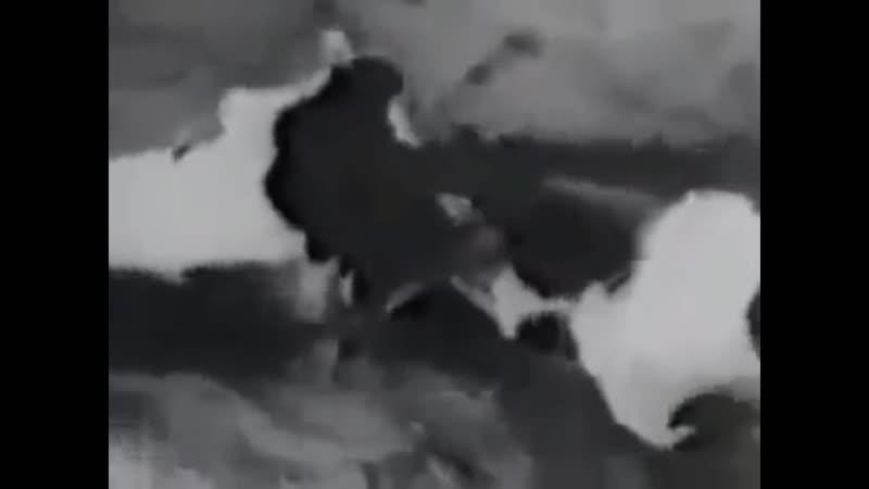 Убийство животных евреями Док фильм Вечный жид Германия 1940