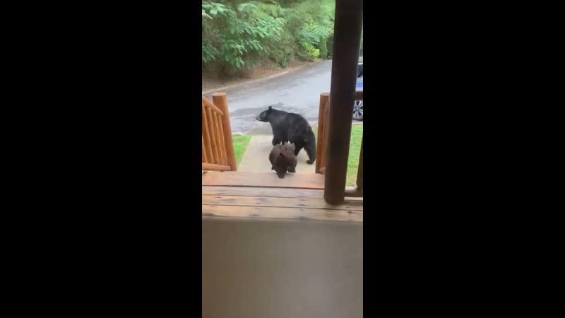 Медвежата устроили поединок возле жилища отдыхающих