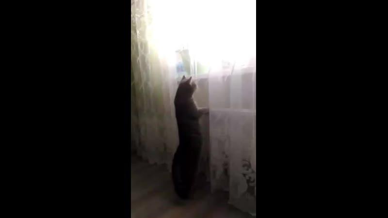 Кот ждёт Деда Мороза mp4