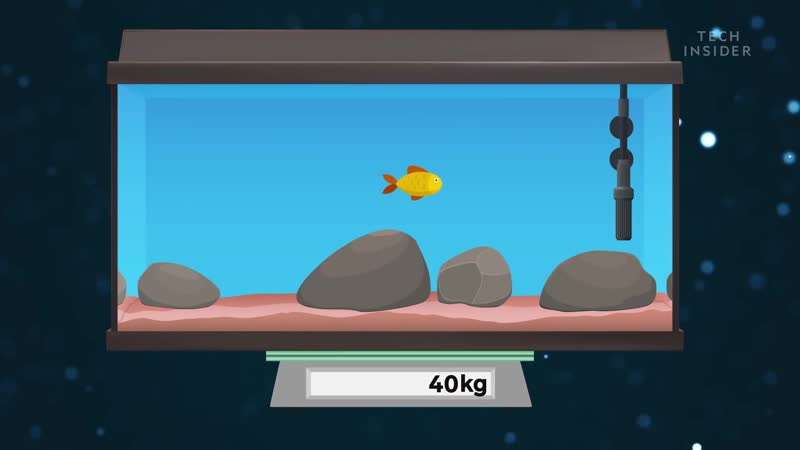 How To Keep Your Goldfish Alive For 15 Years ifhY AHbSRA 1080p
