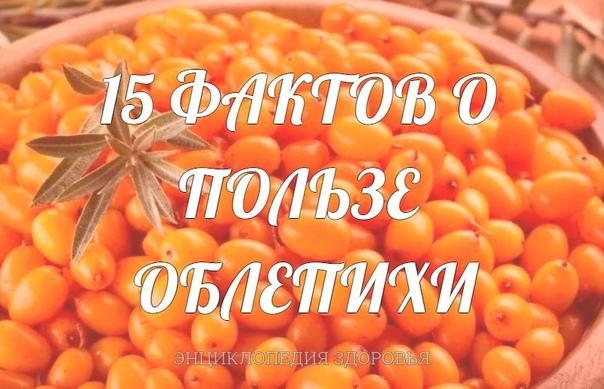 15 ФАКТОВ О ПОЛЬЗЕ ОБЛЕПИХИ.