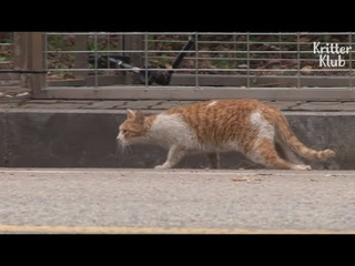 HELP' Stray Cat Pleads For Helping His Friend Be Treated (Part 2) Animal in Crisis EP104