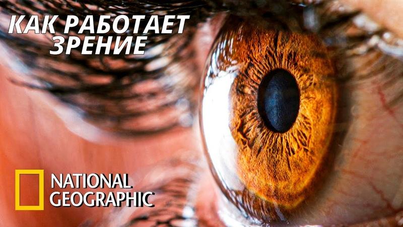 Как работает наше зрение Тело человека Грани Возможного