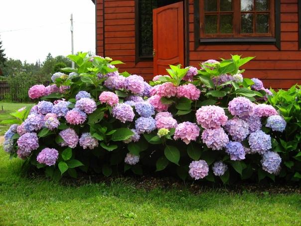 Великолепные цветы!