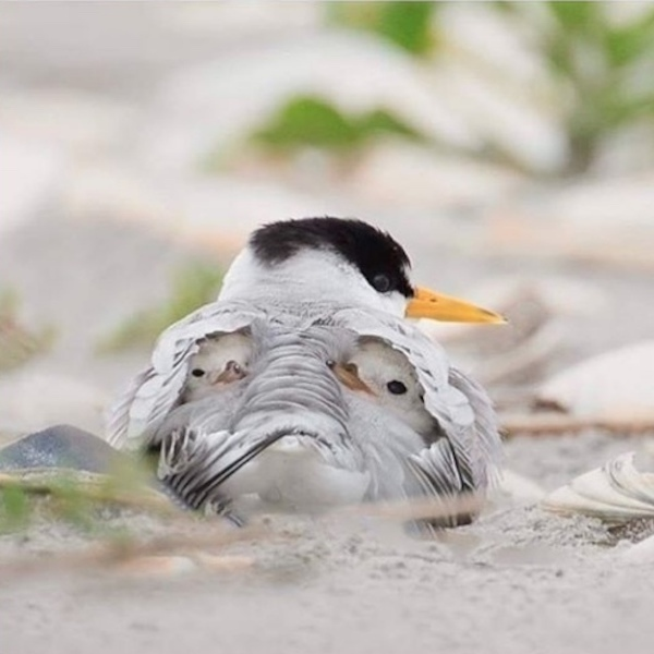 Под крылом матери