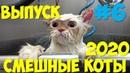 Смешные КОТЫ и кошки 2020 Выпуск 6 смешные видео про котов прикольные коты