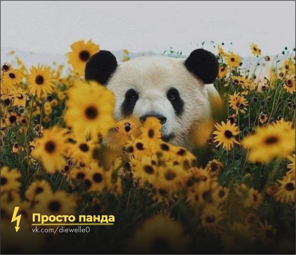 Просто панда радуется лету. И ты порадуйся.