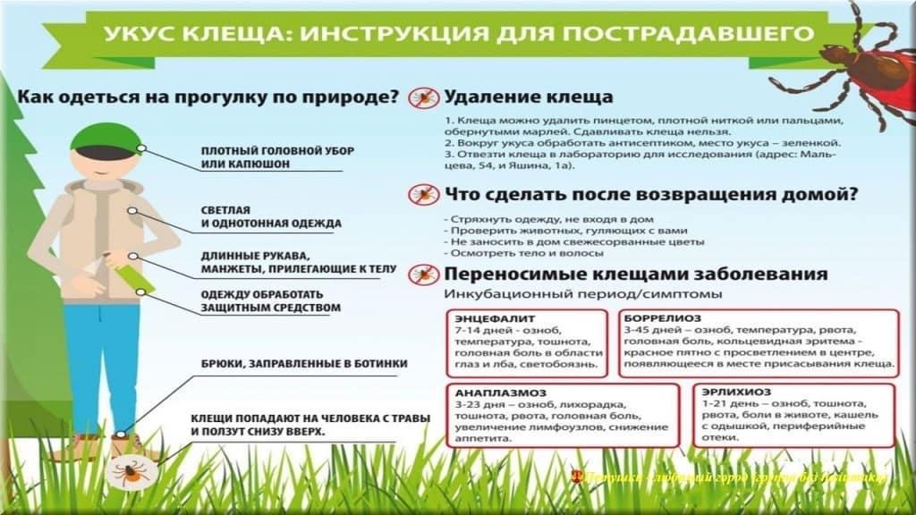 В Петровском районе растёт число пострадавших от укусов клещей