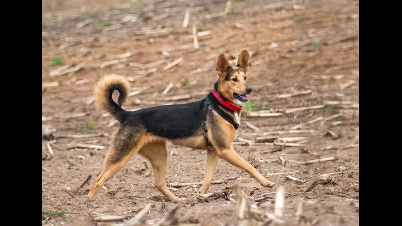 №68 Мастер спорта Наталья Марченко и её питомцы Умная собака Макси ищет дом Путь домой