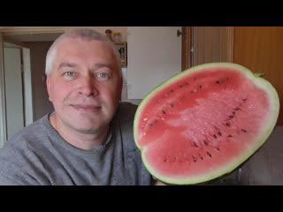 Геннадий Горин на кухне, видео обзор про первый арбуз.