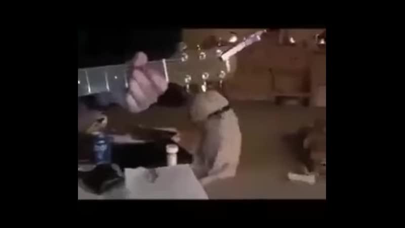 Пёс меломан