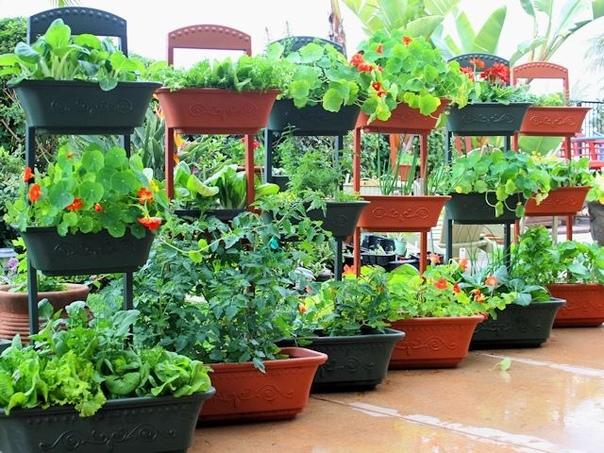Как вырастить овощи на балконе На балконе вполне успешно можно возделывать огород. Растить хрустящие огурчики, ароматные помидорчики, пряные перцы прямо к столу. Процесс выращивания овощей не