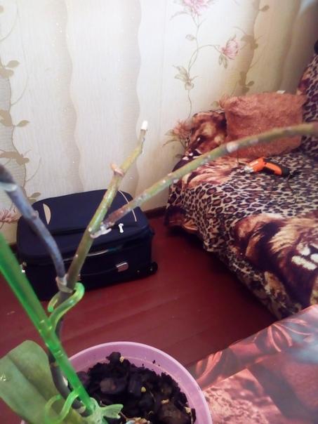 Здравствуйте! Помогите, пожалуйста! Уезжала на юг, на 3 недели, все цветы были нормальные. За это время их никто не поливал, стояли в мисках с водой. Вернулась, обнаружила, что орхидеи поражены