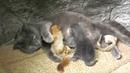 В Крыму кошка усыновила бельчат-сирот