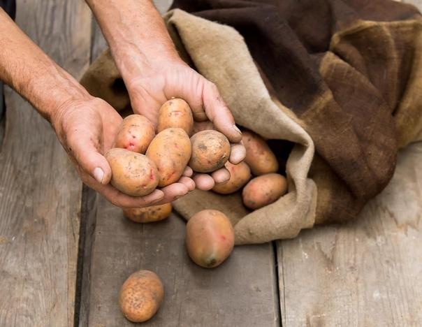 5 ошибок при хранении картофеля.