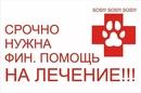 Объявление от Ekaterina - фото №2