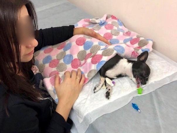В Краснодаре живодер ударил ногой маленькую собаку из-за того, что она гавкала на его сына В местном сообществе говориться о том, что девушка гуляла в ГорПарке со своей маленькой собачкой и