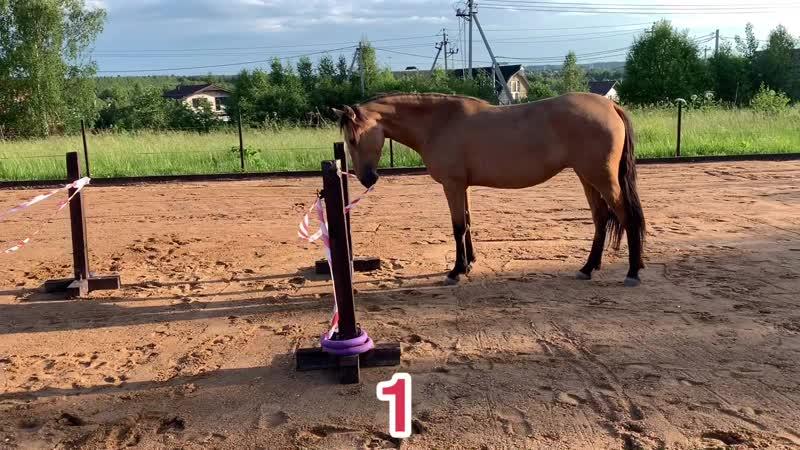 Лошадь-разрушитель препятствий аджилити