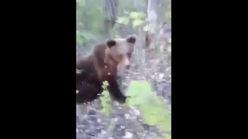 В Камчатском крае мужик докапался до медведя