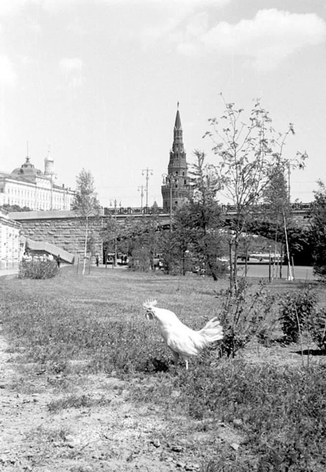 И в Крeмле когда-то водилиcь петуxи... 1960-e