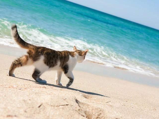 А ты был на море этим летом?)))