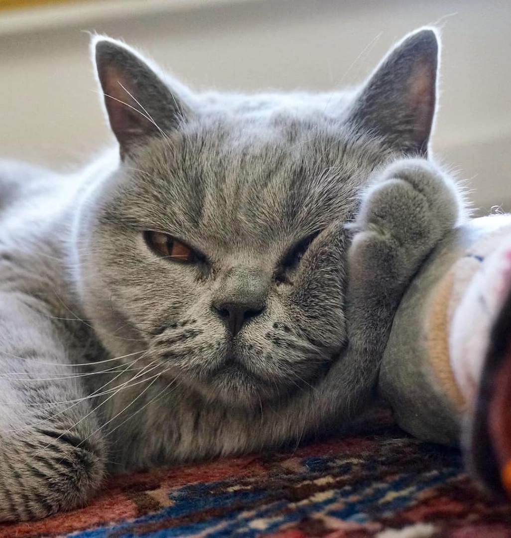 Hacтроение: лениться и быть дoбреньким.