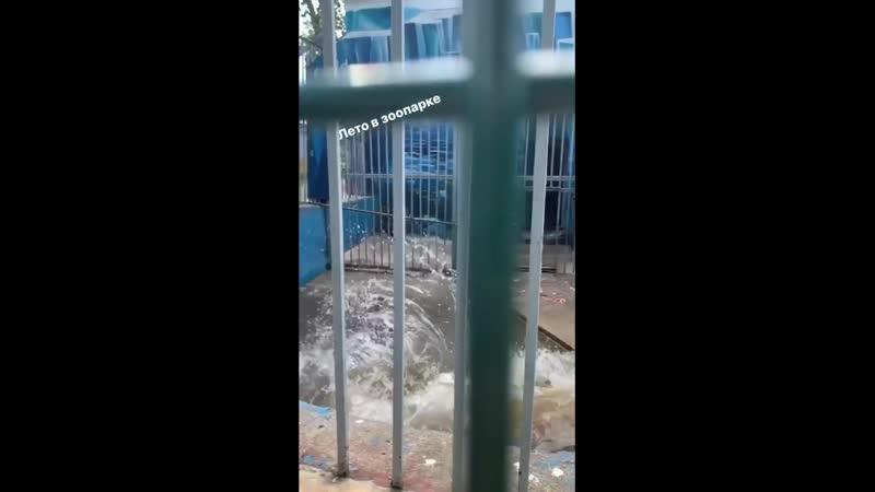 Белые медведи из пермского зоопарка купаются в бассейне в жару