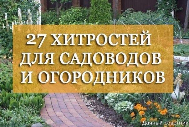 27 ЛУЧШИХ СОВЕТОВ ДАЧНИКАМ-ОГОРОДНИКАМ
