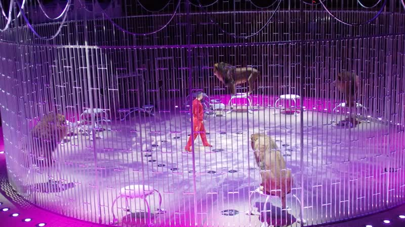 Львы Цирк на Фонтанке 18 01 2020