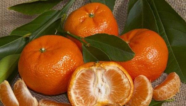 Заранее запасите кожуру мандаринов и апельсинов: она пригодится при нашествии тли