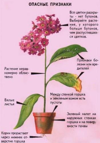 Как распознать больное растение при покупке