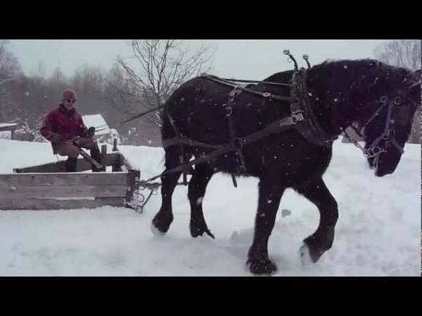 Plowing with Draft Horse and V-Plow_2