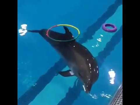 Кася Спаси дельфина и человека