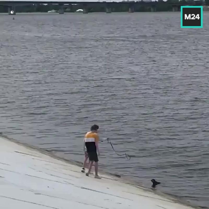 В Перми подростки спасли из реки собаку — Москва 24