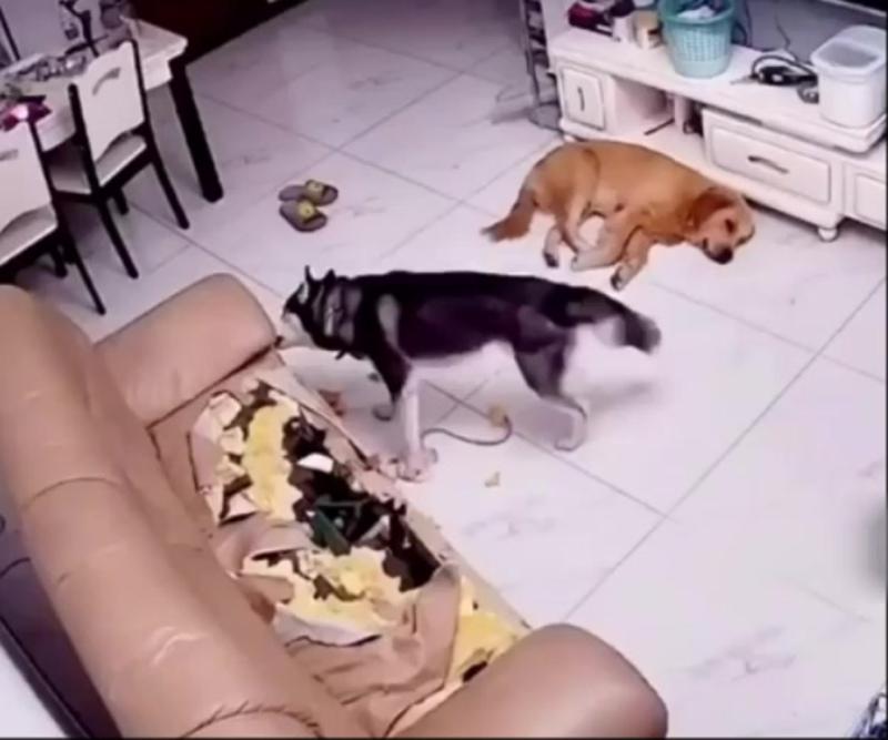 Собака- друг человека)