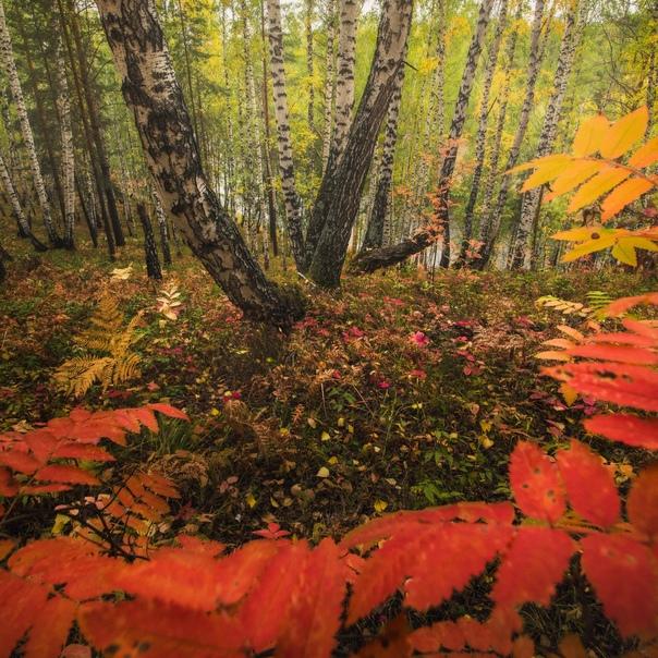 Осенний лес на берегу Исети.Окрестности посёлка Бр...