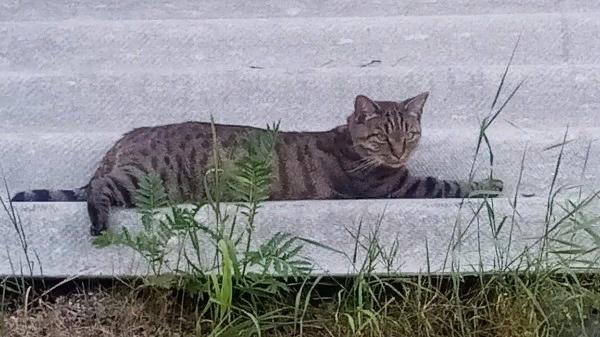 Ночью 1 октября по адресу Северный вал 17 убежала кошка в...