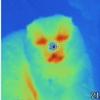 Странный тепловизор и рентген