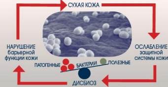 Реальность или миф? Биологическая защита кожи для сохранения ее здоровья и молодости, изображение №3