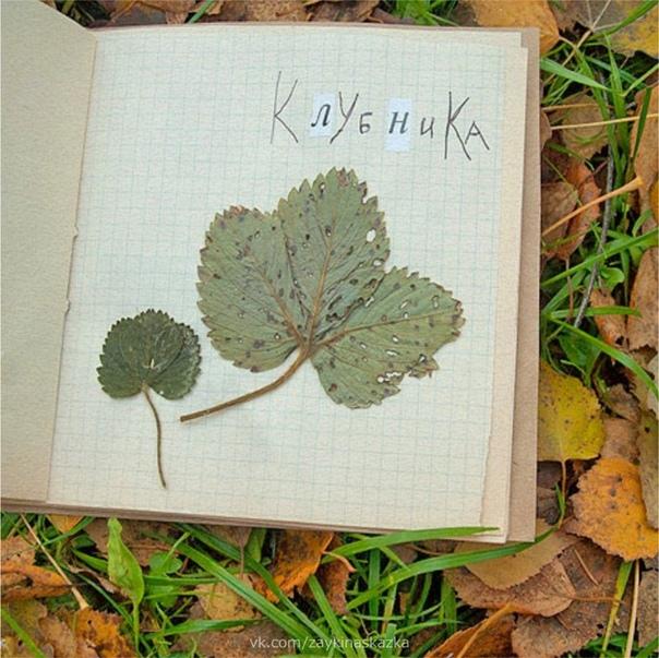 КАК СДЕЛАТЬ КРАСИВЫЙ ГЕРБАРИЙ Детям нравится собирать гербарий. Научите их делать это правильно. Параллельно можно повторять названия растений, сравнивать форму листьев и цветов у разных