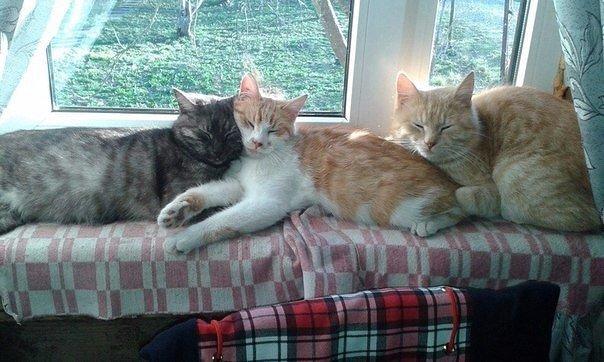 Если в доме три кота, значит в доме теплота!