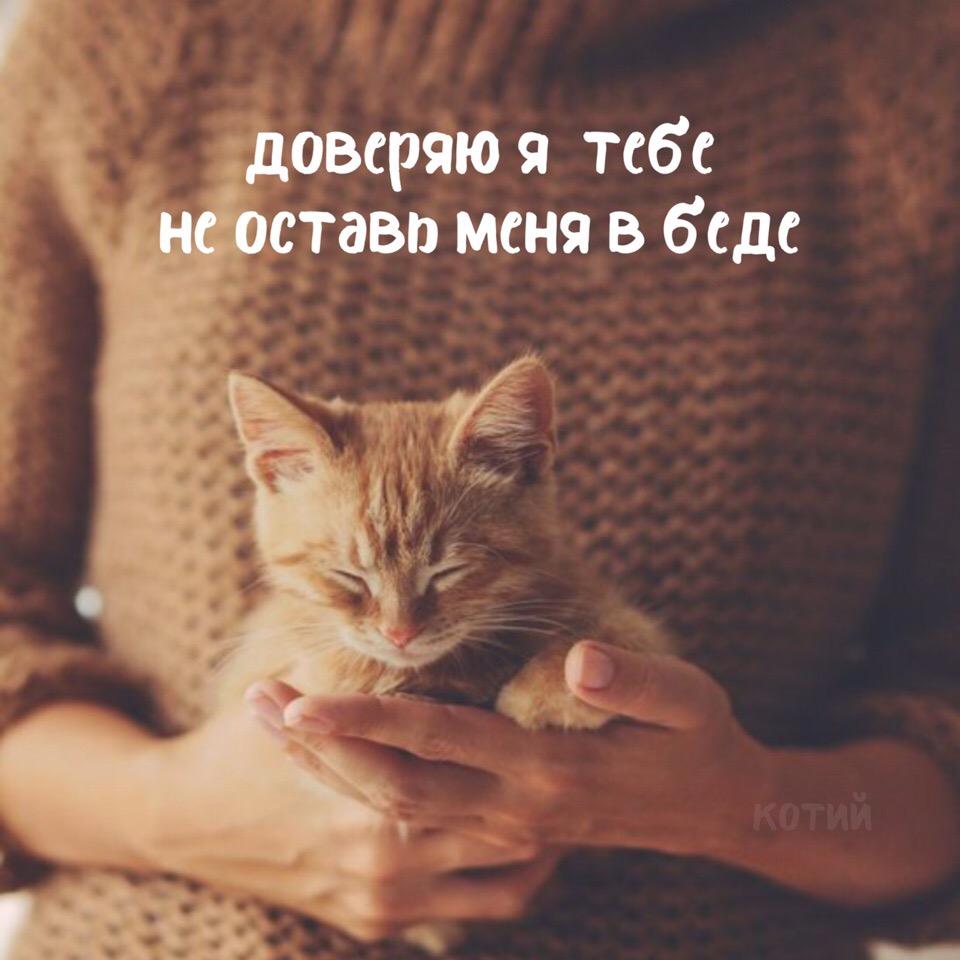 Не обижайте котиков