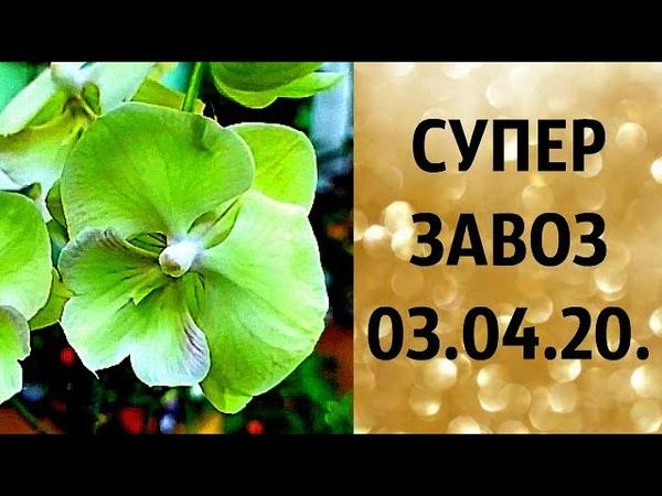 🌸Продажа орхидей завоз 03 04 20 г Отправка только по Украине ЗАМЕЧТАТЕЛЬНЫЕ КРАСОТКИ👍