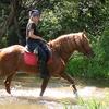 Прогулки на лошадях в Калуге