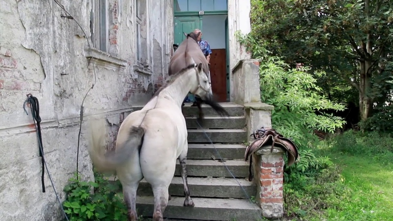 Pomoc dla Leszka i koni